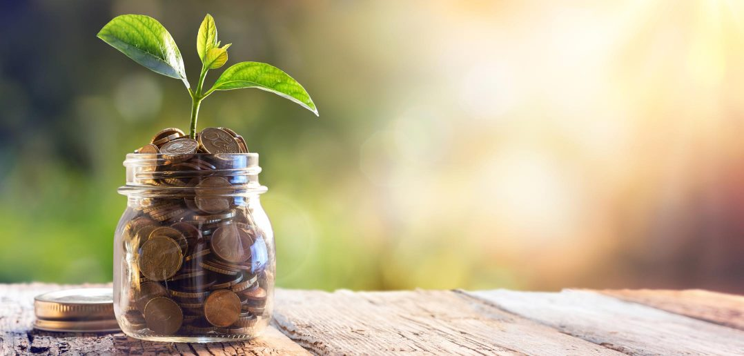 Seedling sprouting from jar of money
