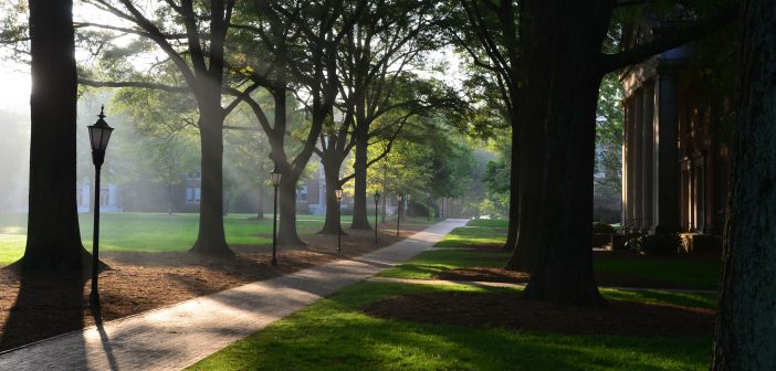 Soaring trees on campus