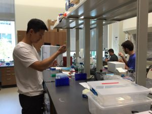 Andy Chun '19 works in the lab during his summer research experience